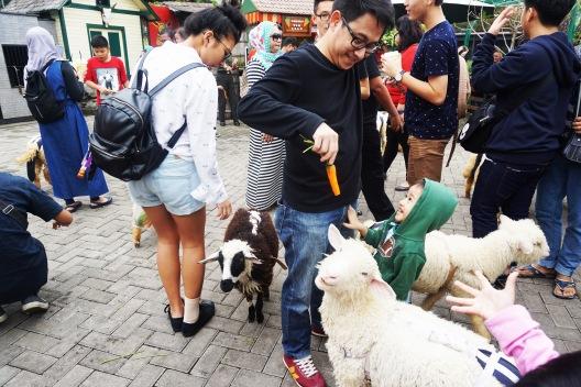 feed-lamb